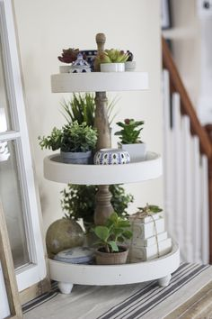 Plant Display on a 3 tiered tray