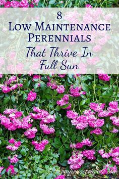 Black lace elderberry weigela and tiger eyes sumac are just a few full sun perennials 8 low maintenance plants that thrive in the sun mightylinksfo