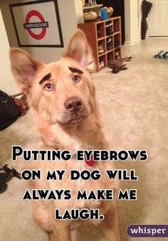 """Putting eyebrows on my dog will always make me laugh."""