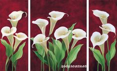 Calla on burgundy II Canvas Art - Gertrud Schweser x Art Floral, Botanical Flowers, Flowers Nature, Beautiful Flowers, 3 Canvas Paintings, Canvas Art, Calla Lillies, Calla Lily, Acrylic Flowers