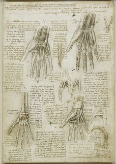 Leonardo Da Vinci. Dell' Anatomia. The bones, muscles and tendons of the hand…