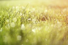 Nature photography - archival print - morning grass dew - green fresh grass - flower photography - 12x8 fine art photograph. $30.00, via Etsy.