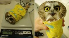 How to weigh an owl - 9GAG