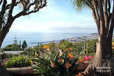 Winter in Funchal, Madeira