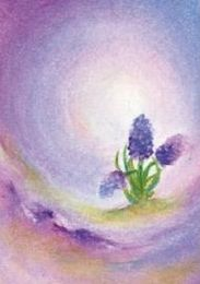 Hyacinth, waldorf education inspired