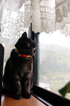 """""""Wherever I am I always find myself looking out the window wishing I was somewhere else."""" --Angelina Jolie Crazy Cat Lady, Crazy Cats, Kinds Of Cats, Looking Out The Window, Cat Boarding, All About Cats, Blue Cats, Cute Photos, Beautiful Cats"""