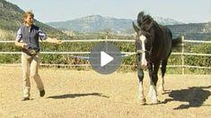 Vorbereitende Übungen für das Verladen Horses, Videos, Animals, Hacks, Horse, Circus Show, Trakehner, Animal Welfare, Training