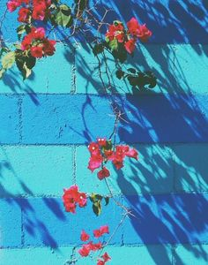 Light blue aesthetic wallpaper plain 29 Ideas for 2019 My Flower, Flower Power, Cinder Block Walls, Cinder Blocks, Light Blue Aesthetic, Textures Patterns, Aesthetic Wallpapers, Planting Flowers, Illustration