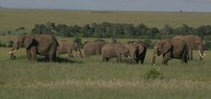 Elephant family | Endless Wildlife