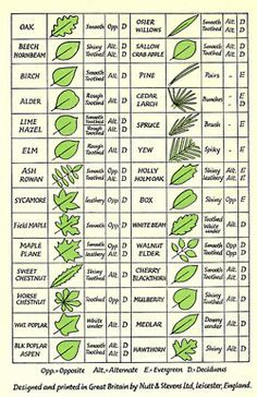 Tree leaf chart. | Garden | Pinterest | Charts, Leaves and Trees