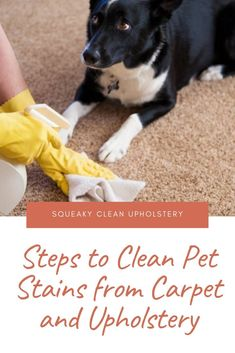 Steps to Clean Pet Stains from Carpet and Upholstery Deck Stairs, Deck Railings, Home Additions, Carpet, Upholstery Cleaning, Stains, How To Plan, Cupboards, Eco Friendly