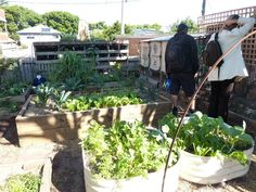 Community Garden behind 3 ducks cafe, Bronte #permaculture by Transition Bondi