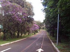 Parque Sabiá, UBERLANDIA, MINAS GERAIS,BRASIL, 2011, JULHO.