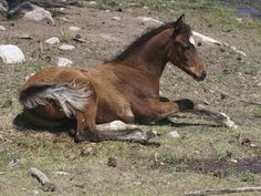 Why Does a Horse Lie Down? - TheHorse.com | Learn about equine sleep patterns and how to tell if the amount of time your horse spends lying down is normal. #horses #horsehealth #horsebehavior