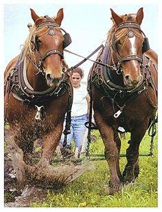 Draft Horse Plowing❤️