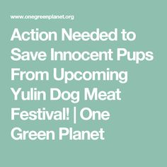 Action Needed to Save Innocent Pups From Upcoming Yulin Dog Meat Festival! | One Green Planet