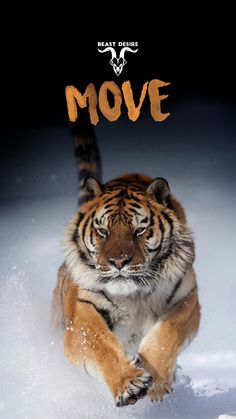 Tiger Quotes, Lion Quotes, Father Quotes, Hd Wallpaper Quotes, Motivational Quotes Wallpaper, Inspirational Quotes, Beast Mode Quotes, Dojo, Attractive Wallpapers