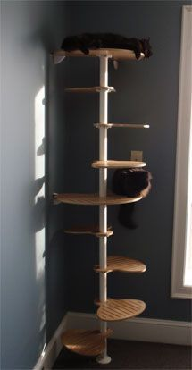 Really cool modular cat perches. This perch uses an IKEA stolman closet pole and clamps, and then you purchase the steps and platforms from Whisker Studio. The last picture on the home page is really cool, but unfortunately is in Flash so I can't post it here. But still a cool idea!