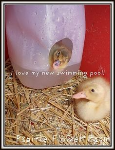 little ducks swimming pool! this would keep the bedding a bit less wet - maybe - worth a try
