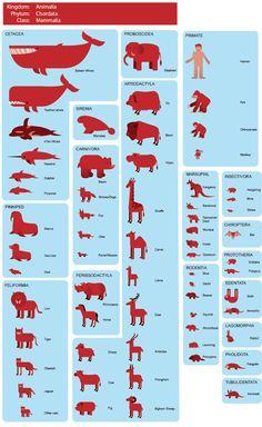 Zoology:  Mammals, organizing language materials