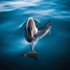Dive into the unknown... @nolanomura #oceanlovers #oceanfilmtour #dolphins #vitaminsea