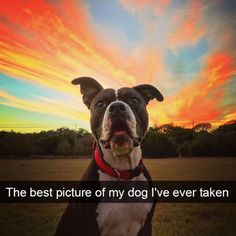 Some Helpful Ideas For Training Your Dog. Loving your dog does not mean you are willing to let him go hog wild on your possessions. That said, your dog doesn't feel the same way. Cute Funny Animals, Funny Dogs, Cute Dogs, Big Dogs, Funny Dog Pictures, Cute Pictures, Dog Snapchats, Goofy Face, Training Your Dog