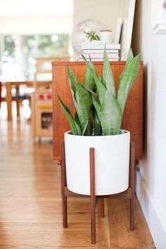 Case Study Cylinder Plant Pot with Wood Stand by Modernica
