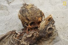 Archaeologists have discovered the most massive sacrifice of children in the Americas. During excavations on the northern coast of Peru, scientists found the remains of more than 140 children and 200 young lamas, reports National Geographic. Llamas, National Geographic, Ancient Peruvian, Ritual Sacrifice, History Taking, Singles Events, Mystery Of History, World's Biggest, Anthropology