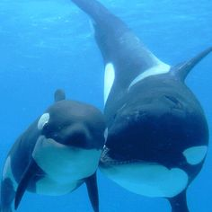 ORCAS :) Lovin on ze bebbies :D
