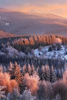 Winter Lights, by Florent Courty