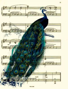 Peacock Art, French Peacock Art Print, Music Sheet Art, Mixed Media Collage,