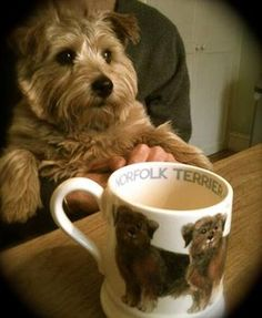 Emma Bridgewater Norfolk Terrier 0.5 Pint Mug and an absolutely gorgeous Norfolk Terrier