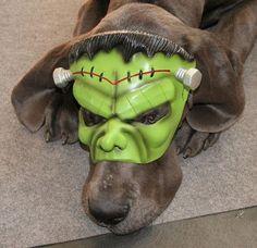 Franken Dog