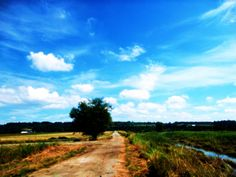 The Middle of Somewhere. Rural Photography Print. Meadow Wall Art. Nature Home Decor.