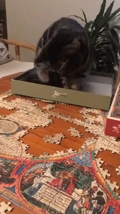 I guess we are finished with the puzzle! #cat #catgif #funnycatgif #bowchickameowmeow