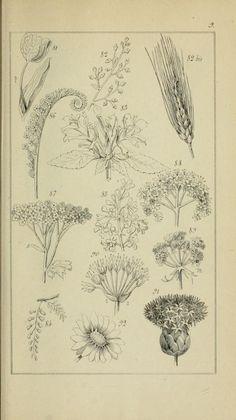 1 - Etudes des fleurs botanique, élémentaire, descriptive et usuelle / - Biodiversity Heritage Library