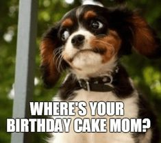 The simple act of sending funny happy birthday mom memes can bring a smile to a mother's face. Here are 101 happy birthday memes to help you get started. Happy Birthday Mom Meme, Happy Birthday In Heaven, Singing Happy Birthday, Mom Birthday, Birthday Cake, Birthday Memes, Happy Memes, Funny Happy, Funny Cake