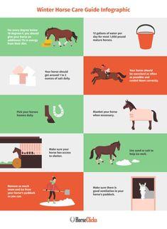 Mini horse care , mini-pferdepflege , soin mini cheval , mini cuidado … – Art Of Equitation Horse Information, Winter Horse, Horse Care Tips, Horse Training Tips, Horse Saddles, Western Saddles, Barrel Horse, Horse Trailers, Gardens