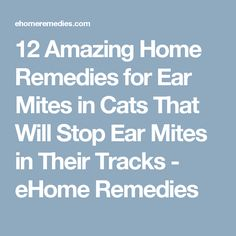 12 Amazing Home Remedies for Ear Mites in Cats That Will Stop Ear Mites in Their Tracks - eHome Remedies