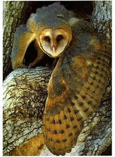 golden owl in the enchanted forest..So Beautiful!! <3