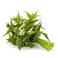 Found in Prostate-Support Stinging Nettle Root Extrac (Urtica dioica). Despite its prickly demeanor, this medicinal herb has staked it's claim among the most valuable herbal remedies. The most common use of Stinging Nettle Root Extract is to support prostate health.