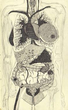 Anatomy. tentaclegarden.Tumblr