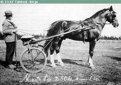 Murto the legendary Finnhorse stallion Race Horses, Horse Racing, Harness Racing, Horse Breeds, Beautiful Horses, Finland, Mustang, Northern Lights, Coaching