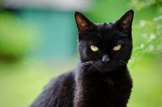 The Mysterious Black Cat | The Valley Patriot