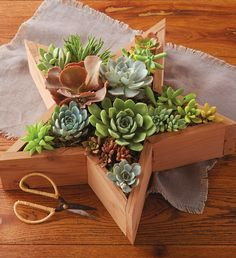 Wooden Star Succulent box