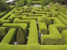 Lose yourself in the Ashcombe Maze & Lavender Gardens at Mornington Peninsula, Victoria. Australia's most famous three-metre high hedge maze and lavender labyrinth. Formal Gardens, Unique Gardens, Amazing Gardens, Beautiful Gardens, Famous Gardens, Garden Shrubs, Shade Garden, Landscape Design, Garden Design