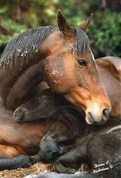 Mare and newborn foal.(100) Horses Are Amazing - Posts