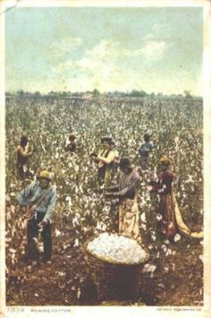 72 Best Local History Images 1920s Old Things Picking Cotton