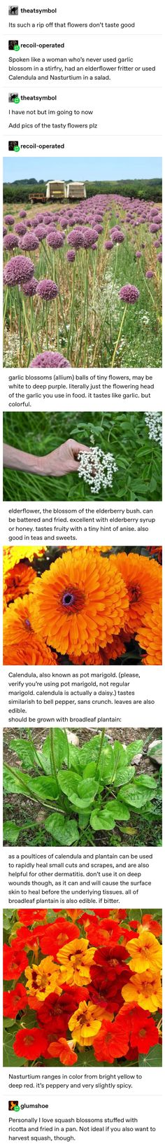 Flowers you can eat Cooking Tips, Cooking Recipes, Healthy Recipes, Good Food, Yummy Food, Kitchen Witch, The More You Know, Things To Know, Chefs