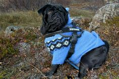 Your dog is not just a pet. Your dog is not just an animal. Your dog is a bona FIDO member of the family! So of course your dog needs to dress the part right? Pug Puppies, Pug Dogs, Funny Dogs, Baby Pugs, Cute Pugs, Pug Life, Women's Leggings, Small Dogs, Pet Care